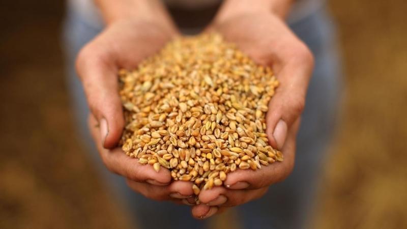 РФ к21ноября увеличила сбор зерна на12%